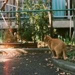 大切な猫が家出してしまったときの探し方ガイド