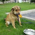 我が家の犬があまり水を飲まない これって病気?