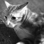 ストレスのよる猫の抜け毛への対策ガイド