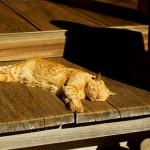 夏の暑さに要注意!猫にエアコンは必要なの?