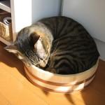 マッサージで猫の便秘を解消してあげよう!