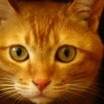 猫の平均的な寿命はどれくらい?