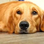 犬の目に映る色 犬の視力のフシギを知りたい!視界はモノクロ?