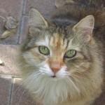 臭わないうんちの処理法で飼い主も愛猫もストレスフリーに!