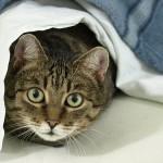 体重は猫の月齢に応じてどう変わるの?