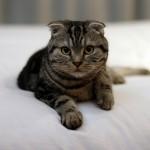 お宅の猫ちゃんの利き手はどっち?右利きか左利きを調べる方法