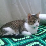 お風呂好きな猫にするためのコツ