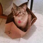 うちの猫はハウスに入らない どうやったら、入るようになる?