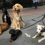 犬はどれぐらいの頻度でシャンプーするべき?