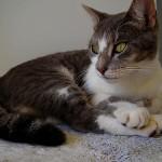 猫の爪切り 頻度はどのくらい?