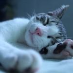うちの子の睡眠時間は長すぎ? 猫の眠りのヒミツ