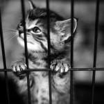 ストレスを感じる? 猫のケージ飼い