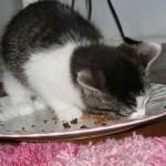 食欲にムラがある… 飼い猫が心配!