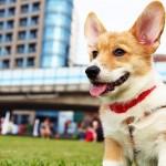 飼い犬の耳が臭い! これって、動物病院に行くべき?