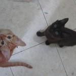 多頭飼いのために 猫の相性の見分け方ガイド
