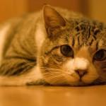 猫が風邪をひいた! ほっといても、自然治癒はする?