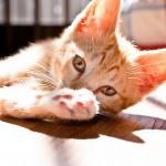 猫ちゃんの名前のアイディア 和風な名前 オス編