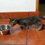 子猫をケージに入れるとストレス? 正しい飼い方ガイド