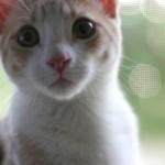 猫の気持ちは表情にあらわれるの?