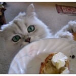 テーブルに乗らせたくない 食いしん坊な猫のしつけ方