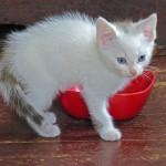 猫のウンチの色が白いときの原因と対策