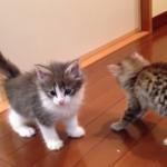 社会性の時期! 生後2ヶ月の子猫の育て方