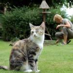 猫ちゃんのうんち 1日の回数はどれくらいが正常?