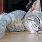 睡眠中の猫の痙攣 これってもしかして、病気!?