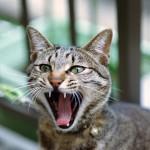 猫の歯に黒い線が! もしかして虫歯!?