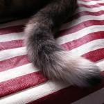 猫がしっぽを左右にパタパタさせているときの気持ちを知ろう!