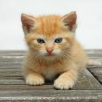 子猫のトイレのしつけはいつの時期にすればいい?
