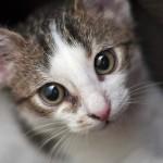 噛む猫をいい子に変えちゃおう! 噛み癖を治すしつけ方