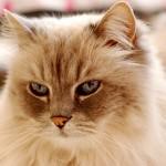 猫の年齢を判断する方法ってある? 見分け方を解説!
