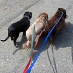 犬がしっぽを追いかけるときの原因ってなに?