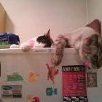メリットもデメリットも知って、もっと猫を愛しちゃおう!