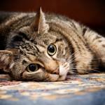 猫の気持ちは行動にあらわれる? あんな動作の意味とは