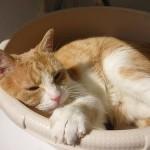 猫ちゃんのうんちがゆるいときの原因と対策