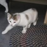 猫の不思議な行動 人の後をついてくる意味とは?