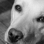 目にも注意!! 犬のアレルギー症状と対策