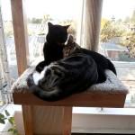 家具や柱で爪とぎされないための猫のしつけ方