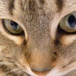 甘くみてはいけない! 子猫の目やにの原因はなに?