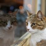 性別による猫の性格の違い オスの方が甘えん坊!?