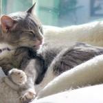飼い猫の鳴き声から感情や意味を知ろう!