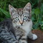 一人暮らしでもストレスを溜めさせない猫の飼い方