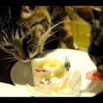 猫の大好物 生クリーム 食べさせていても大丈夫?