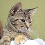 メス猫が欲しい方必見! 避妊手術の費用とアフターケア