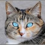 猫のワクチン接種費用と効果を知ろう