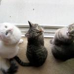 毛色を知ろう!意外と多い猫の種類