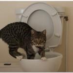 多頭飼いの悩み! トイレの数は猫の数に合わせるべき!?
