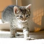 トイレの場所を変更することは猫にとってストレス?
